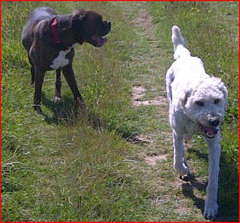 Furry Friends Dog Walking Brighton